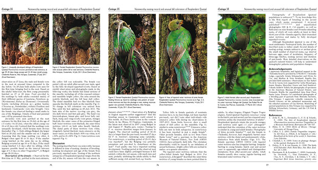 research on Horned Guan